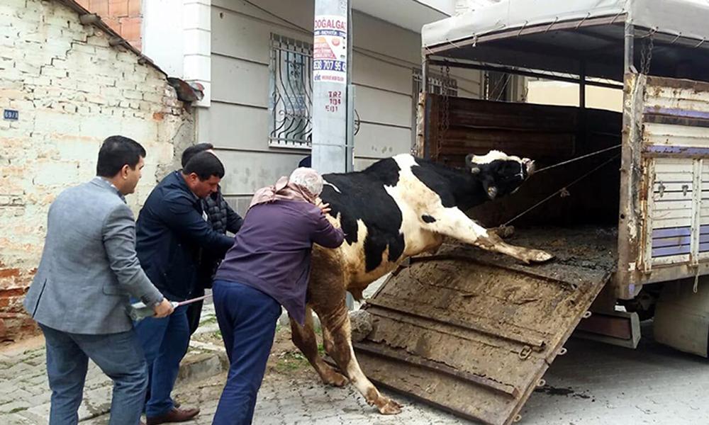 Evinde beslediği hayvanların tahliyesi için gelen polisleri bıçakla yaraladı