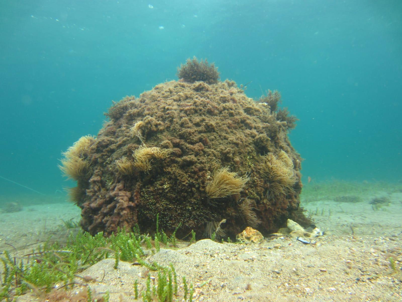 Birinci Dünya Savaşı'ndan kalma su altındaki mühimmat imha edildi