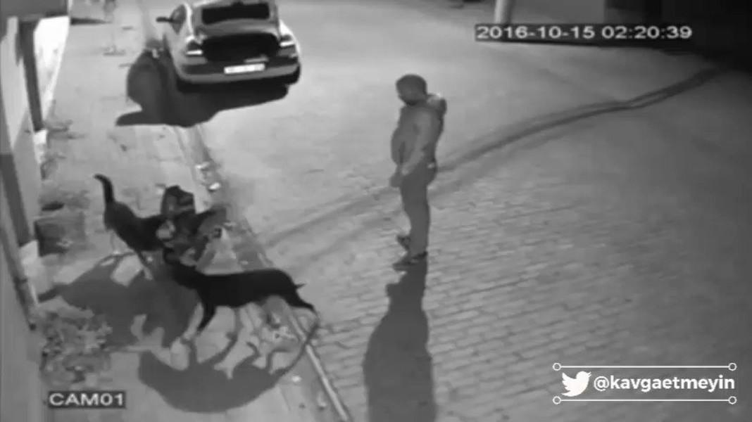 Sokak köpeklerini döven adama tasma taktı