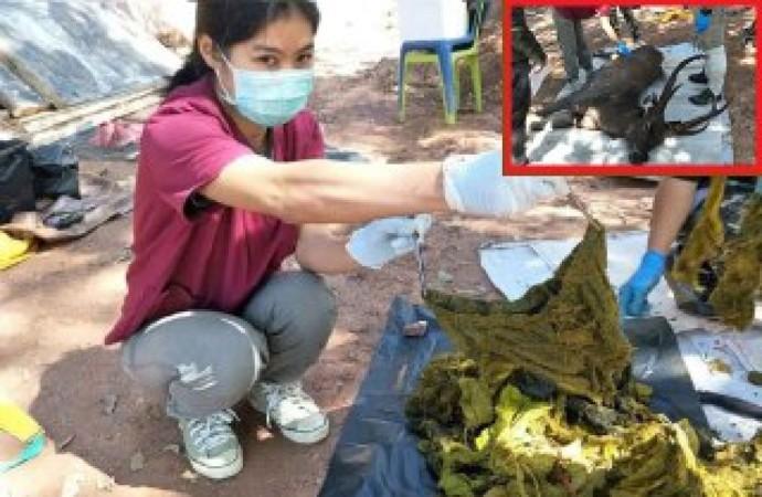 Tayland'da ölü bulunan geyiğin midesinden iç çamaşırı çıktı!