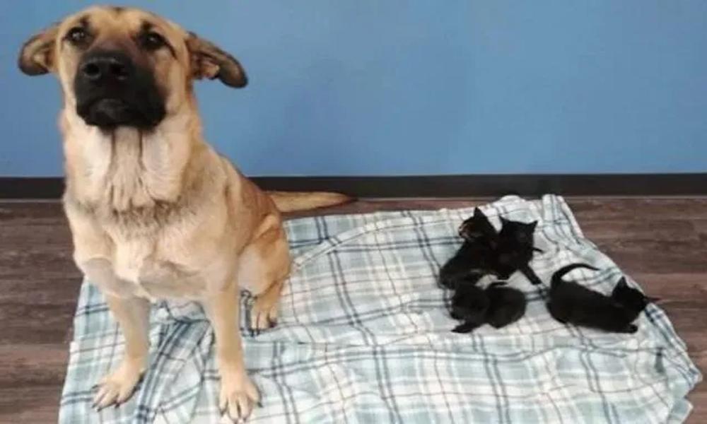 Kedi yavrularını soğuktan korumak için yaptığı yürekleri ısıttı!