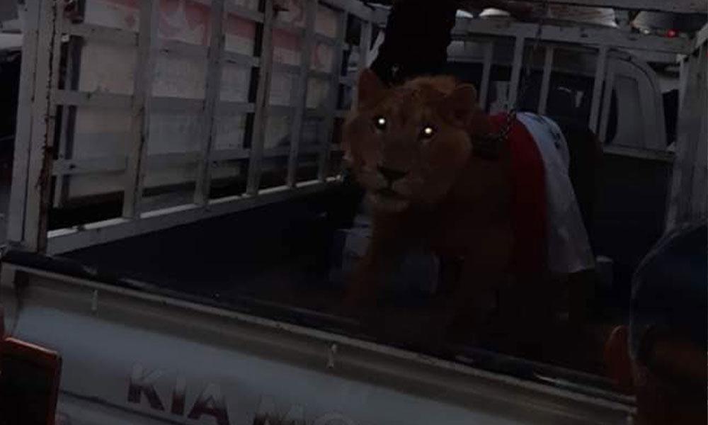 Polis K9 köpekleriyle müdahale edince göstericiler meydanlara aslanlarla döndü