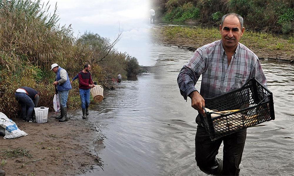 Ölü balıklar kıyıya vurdu; Kasalara doldurup eve götürdüler