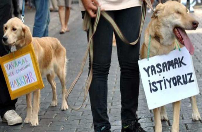 Bursa'da satanist ayin iddiası!