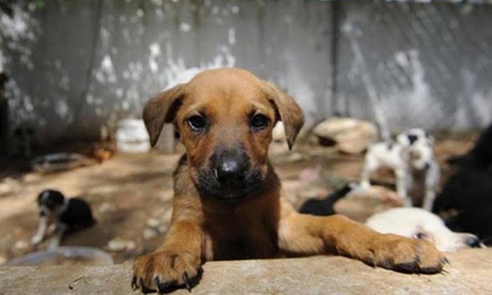 Hayvan hakları yasa teklifinde sona gelindi: Hayvanını terk edene 10 bin TL ceza, kötü mualemeye 2 yıl hapis
