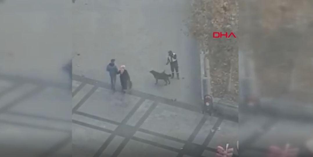 Duygulandıran anlar… Temizlik işçisinden sokak köpeğine masaj