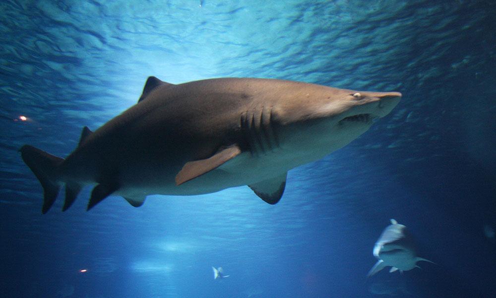 Günlerdir aranıyordu… Eli ve alyansı köpekbalığının karnından çıktı