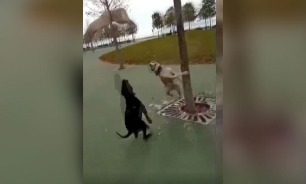 Kediyi ağaçtan düşürüp köpeklere parçalatan şahıslar gözaltına alındı