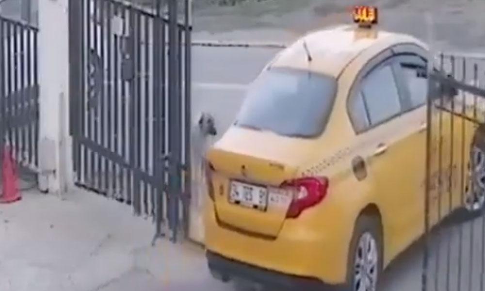 Sosyal medya bu görüntüleri konuşuyor: 'Taksi şoförü yavru köpeği 'bilerek' ezip öldürdü' iddiası