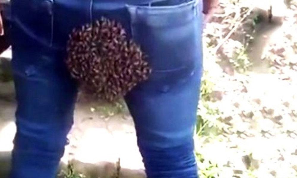 Bakan bir daha bakıyor! Arılar bir anda kalçasına yapıştı…