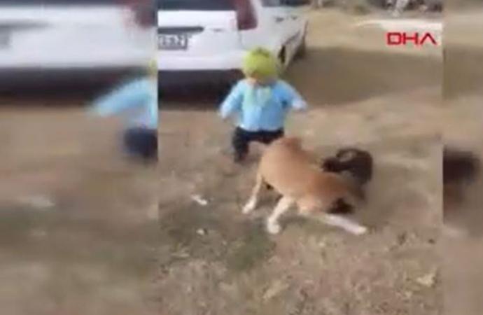 Sokak köpeğini ısırmaya çalışan minik Miraç'ın görüntüleri