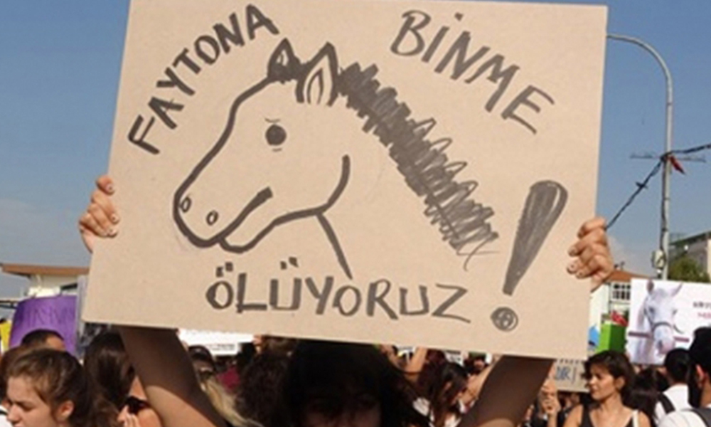 '2012'den beri Adalar'da 702 at öldürüldü'