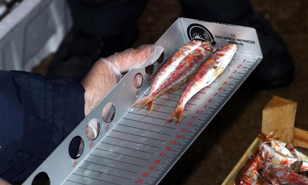 Ankara'da balık boyu denetimi