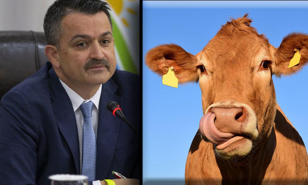 AKP'nin hayvancılık politikası değişmiyor… Binlerce büyükbaş ithal edilecek