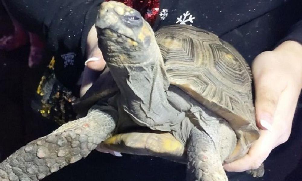 Noel günü evde yalnız kalan kızgın kaplumbağa evi ateşe verdi