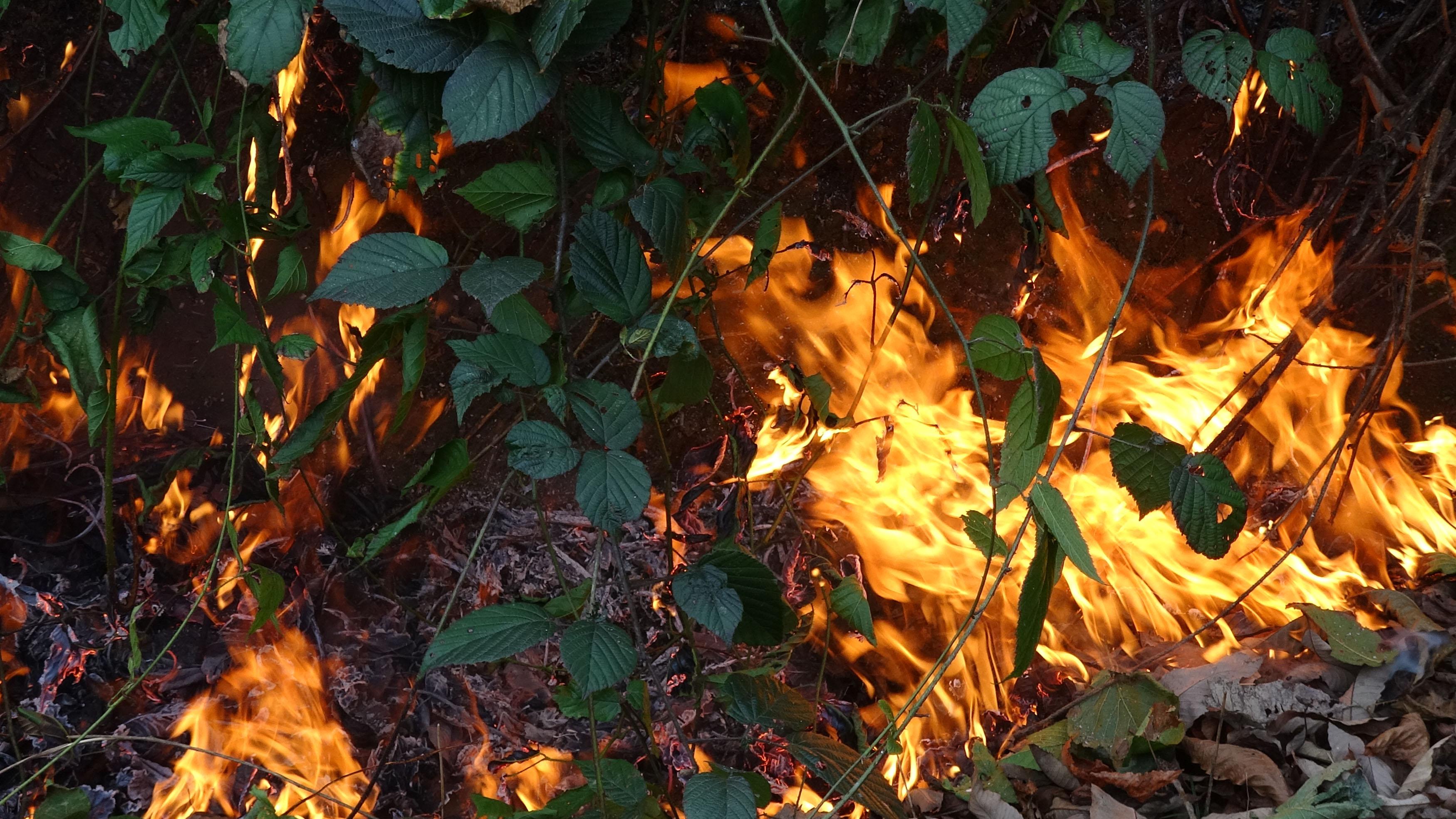 Karadeniz yanıyor… 8 kişi hakkında soruşturma