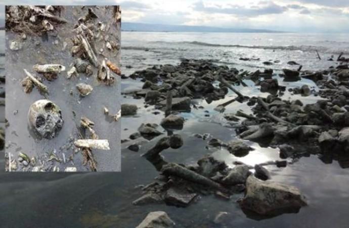 Van Gölü'nde sular çekilince kıyıya kemikler vurdu