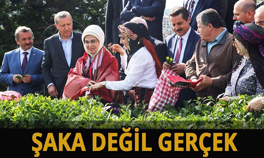 AKP'nin eseri! Rize'nin en fazla ithal ettiği ürün çay oldu