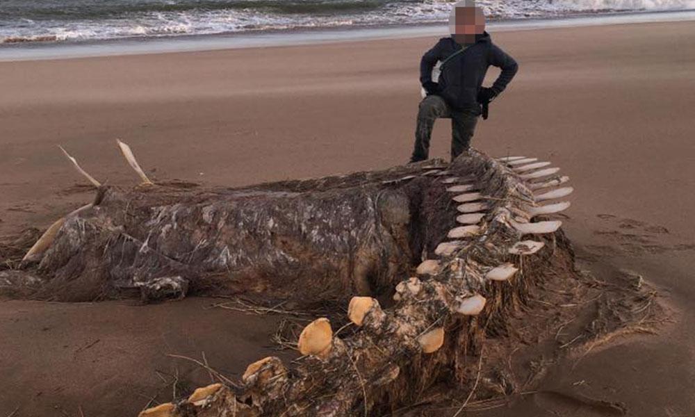Loch Ness Canavarı bulundu iddiası