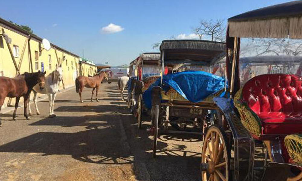 İBB, fayton plakaları ve atlar için 90 milyon TL ödeyecek