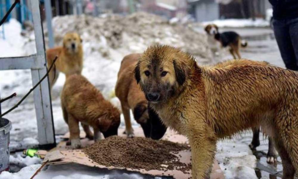 AKP'li belediyenin yardımseverlere verdiği cevap: Köpekler gürültü kirliliği