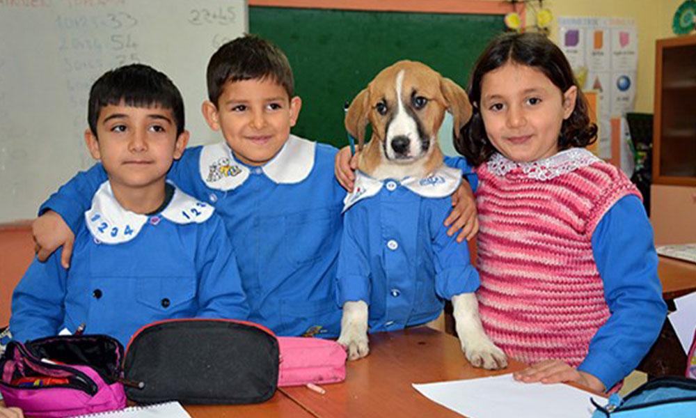 Fındık köpek, okula başladı