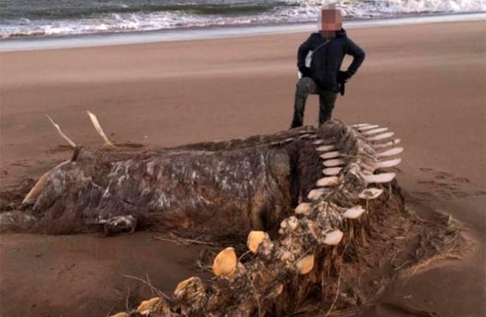 İskoçya'da fırtına sonrası karaya vuran 'devasa iskelet' görenleri hayretler içinde bıraktı