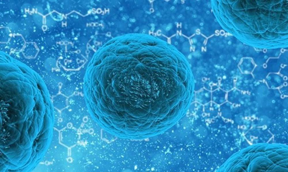 Genleri bilinenlerden çok farklı! 'Yaravirus' ilk kez keşfedildi