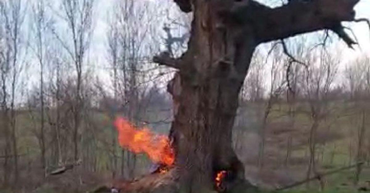 400 yıllık çınar ağacını yaktılar!