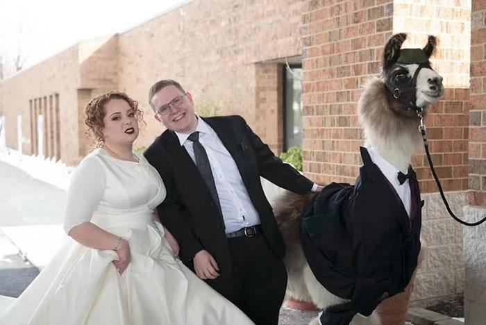 Düğünde smokinli lama sürprizi