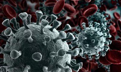 70 ilde mutasyonlu koronavirüs!
