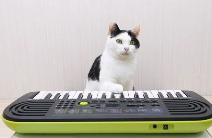 Bu sevimli kediler ile stresinizi unutun