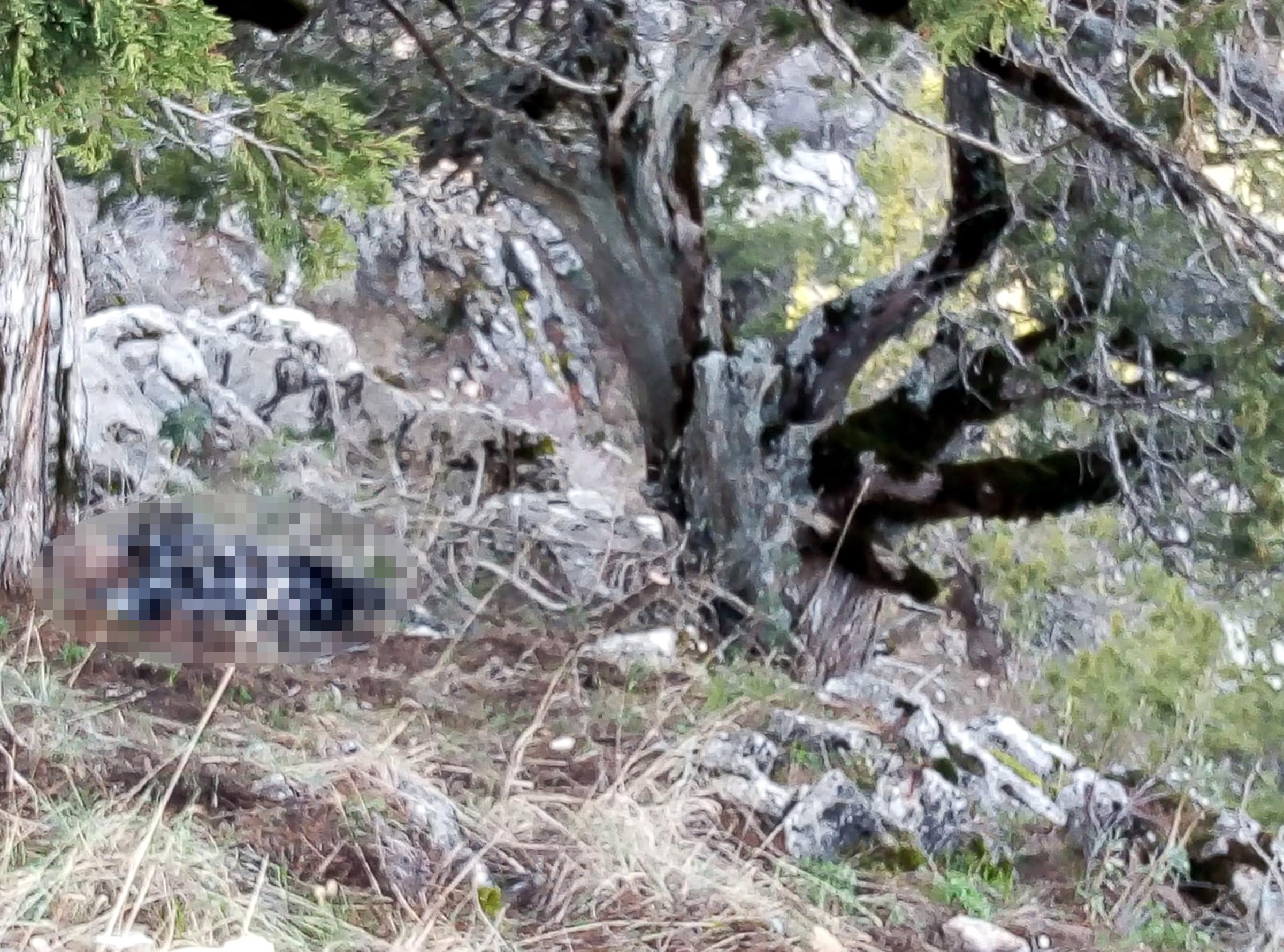 Odun toplamaya gittiği ormanda ölü bulundu