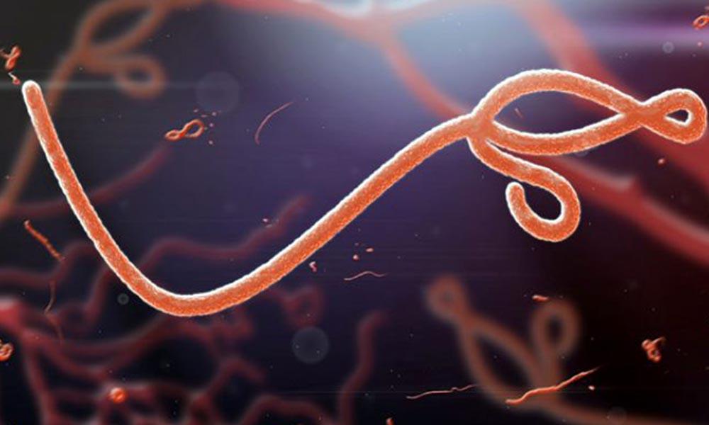 DSÖ duyurdu: Ebola salgını tekrar başladı!
