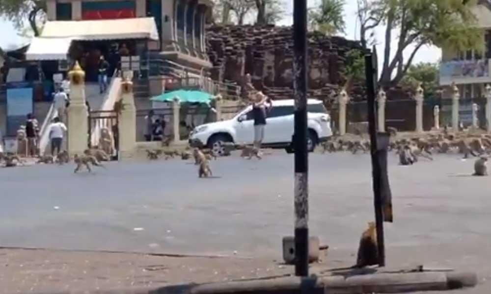 'Turistik eğlence' olarak beslenen binlerce maymunun koronavirüs savaşı