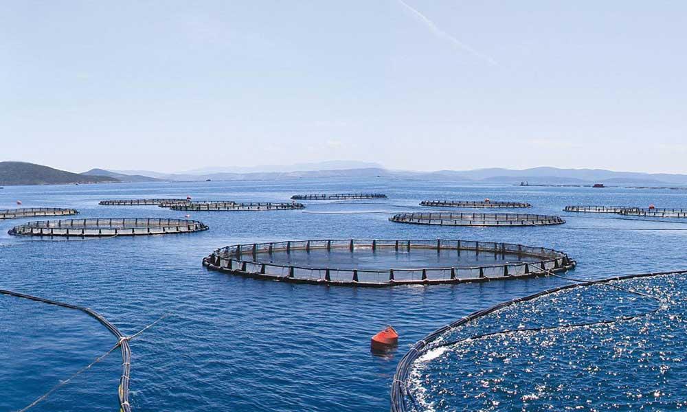 İki milyon balık özgürlüğüne kavuştu