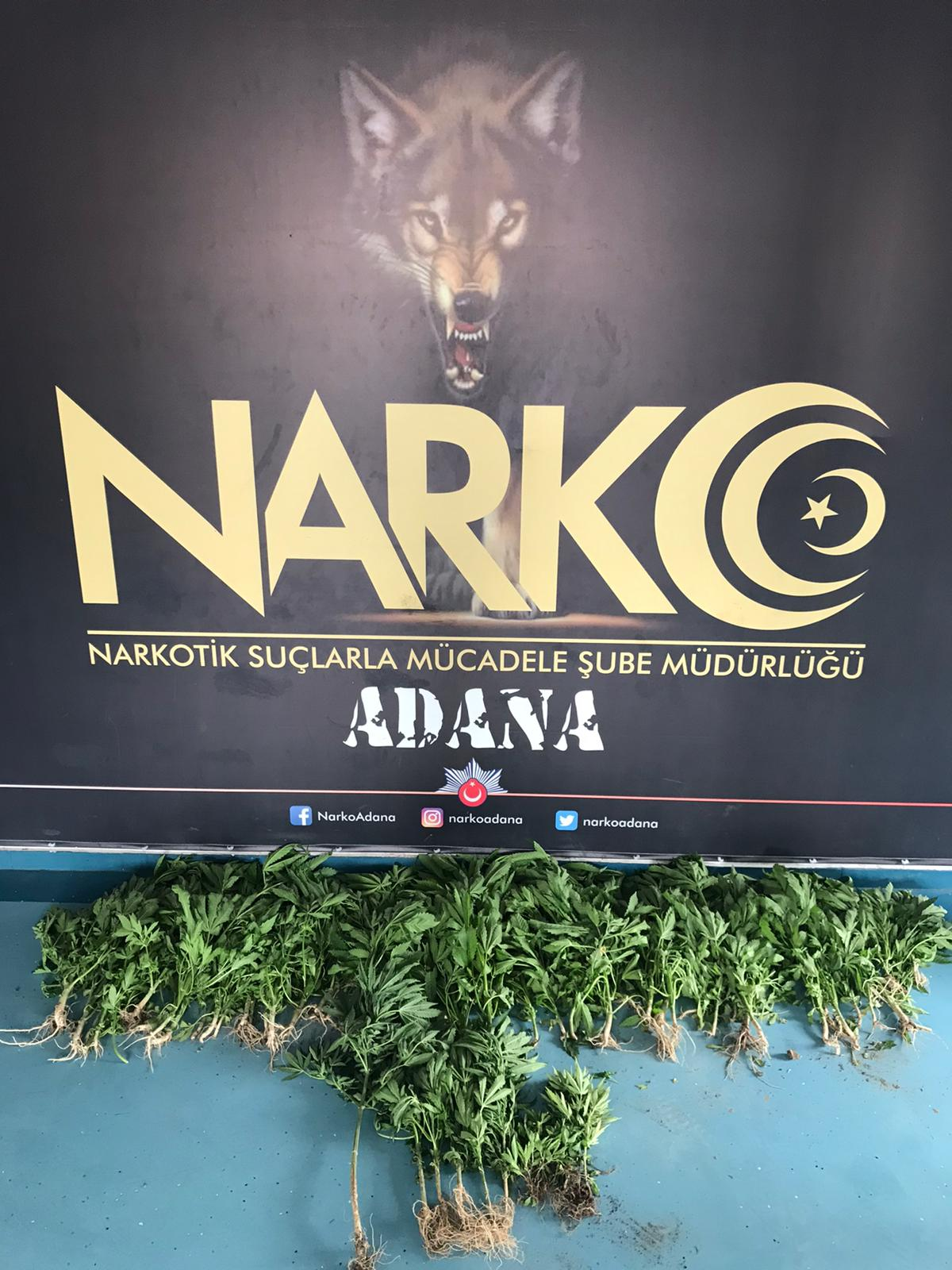 Adana'da villaya Hint keneviri operasyonu