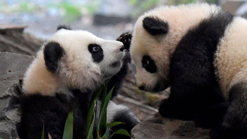Hayvanat bahçesinden 'feda listesi': Bazı hayvanları diğerlerine yem olarak verebiliriz