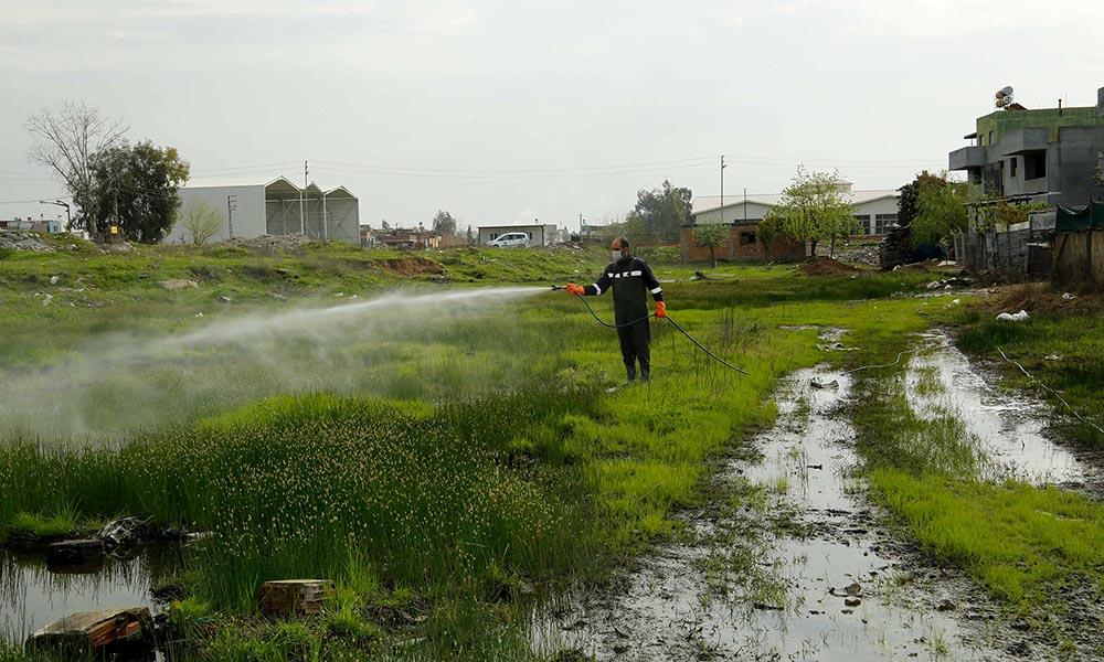 Büyükşehir; koronavirüs, sivrisinek ve palmiye zararlısıyla eş zamanlı mücadele ediyor