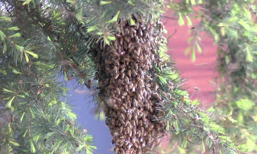 Üsküdar'da arı paniği! Mahalle ayağa kalktı