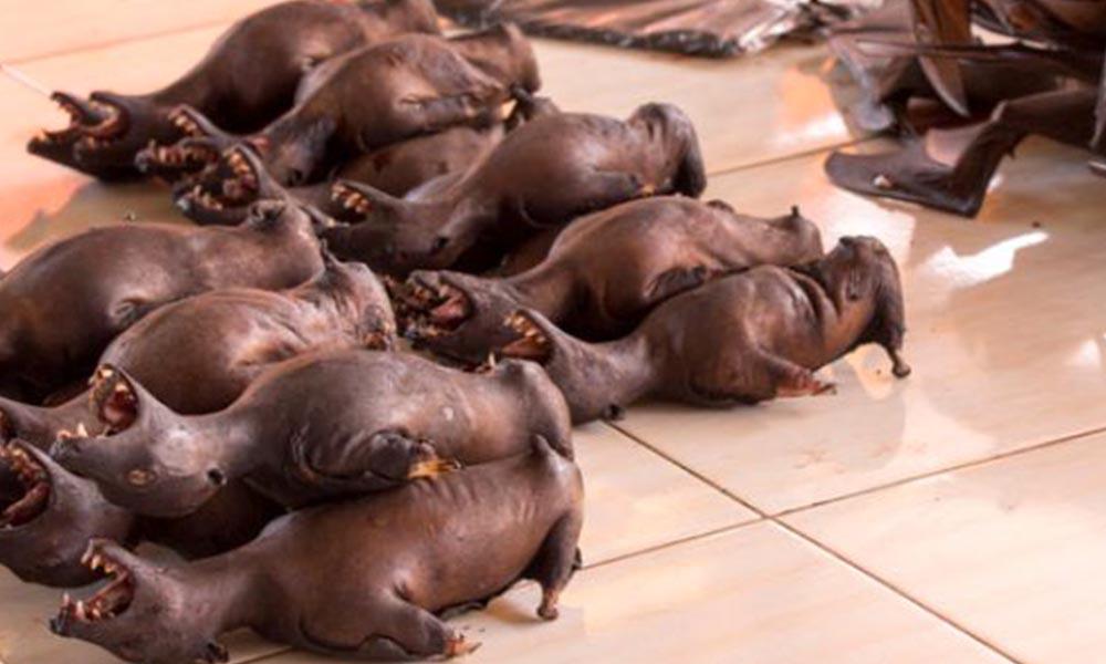 Koronavirüse Çinli zenginler mi davetiye çıkardı? Vahşi hayvanları yemek lüks sayılıyor