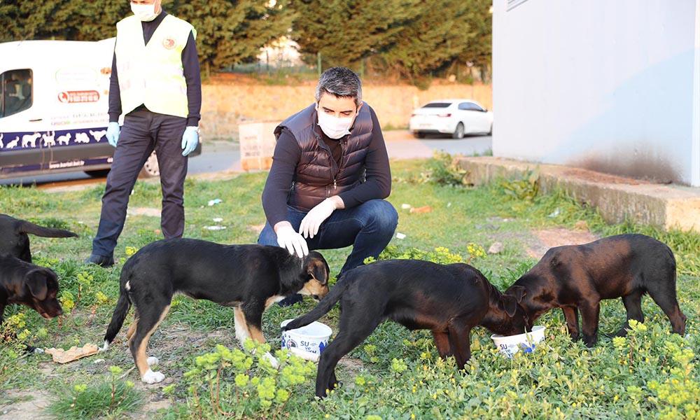 Kartal Belediyesi, sokağa çıkma yasağı boyunca da sokak hayvanlarının yanında