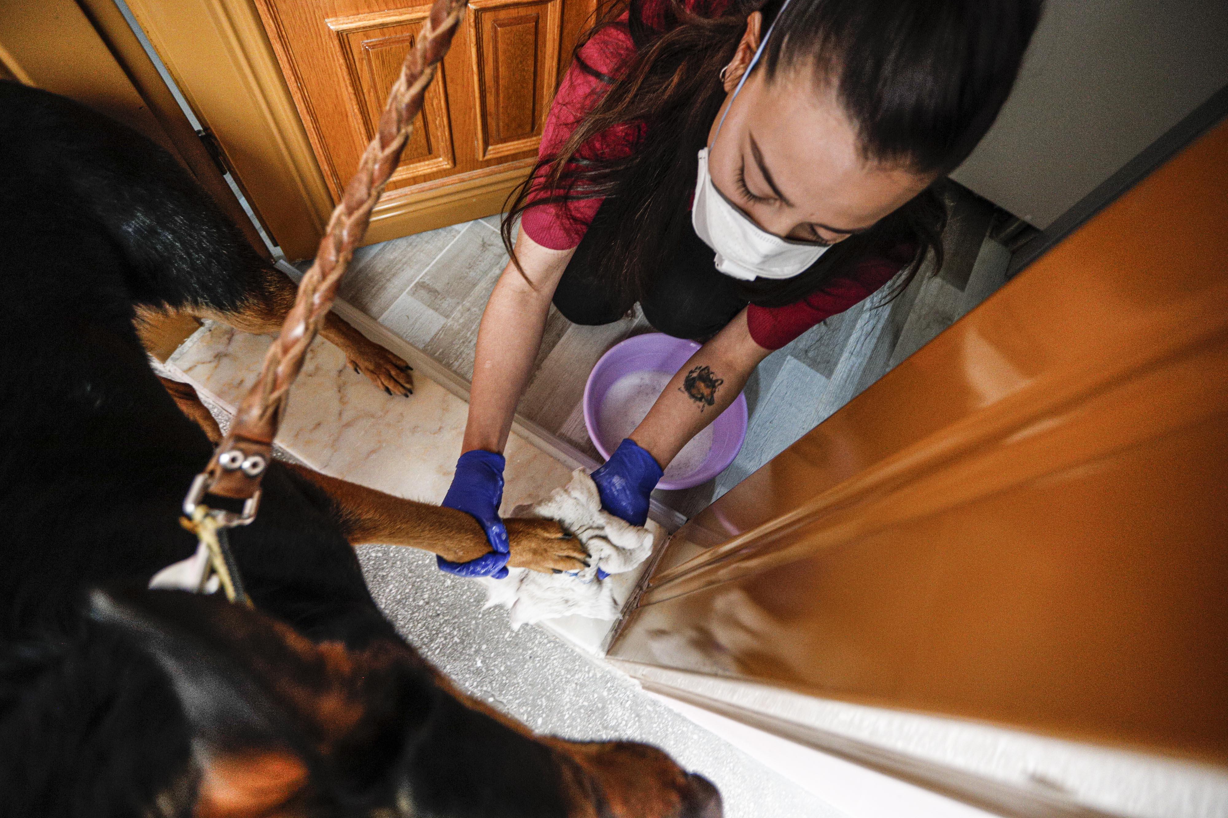 Ev hayvanlarının virüse karşı önlemi nasıl alınmalı?