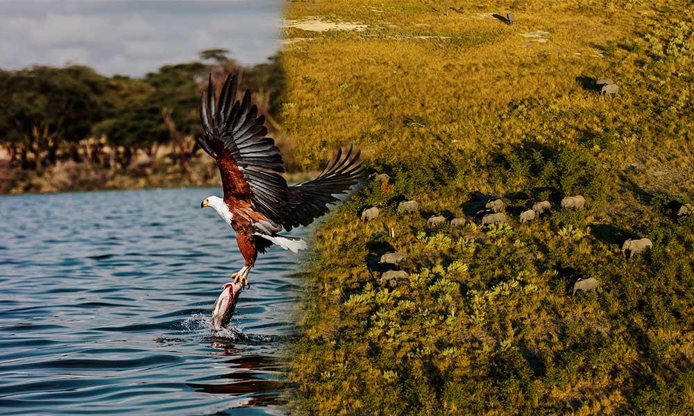 Adını ilk defa duyacağınız yer Okavango… İşte Süha Derbent'in fotoğrafları