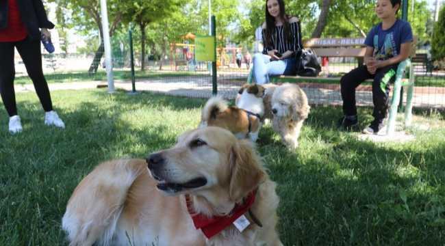 Süleyman Soylu: Hayvanlarını gezdirenlere kesilen cezalar iptal edilecek