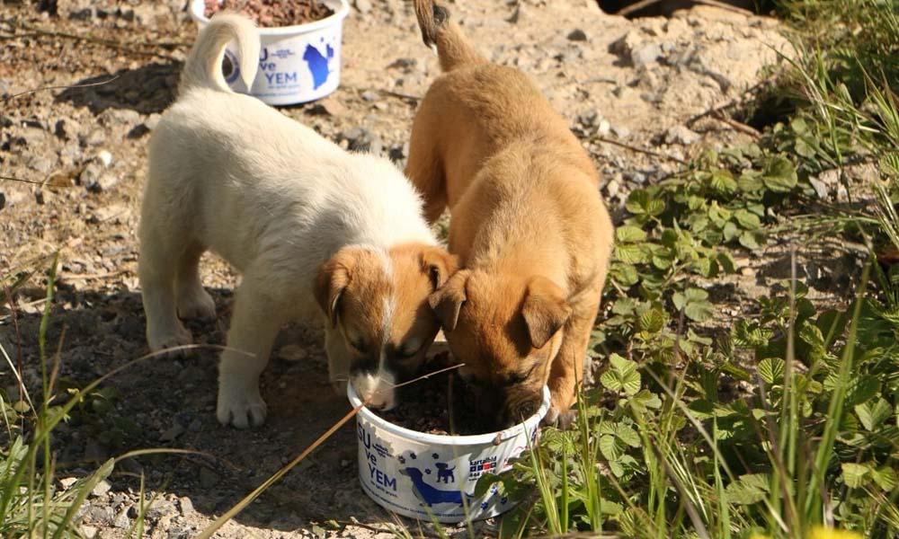 Kartal Belediyesi sokak hayvanları için teyakkuzda