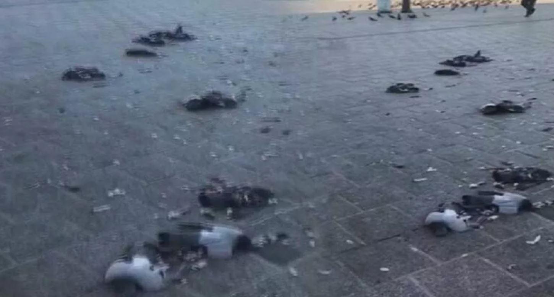 Eminönü'nde onlarca güvercini ezen cani gözaltına alındı