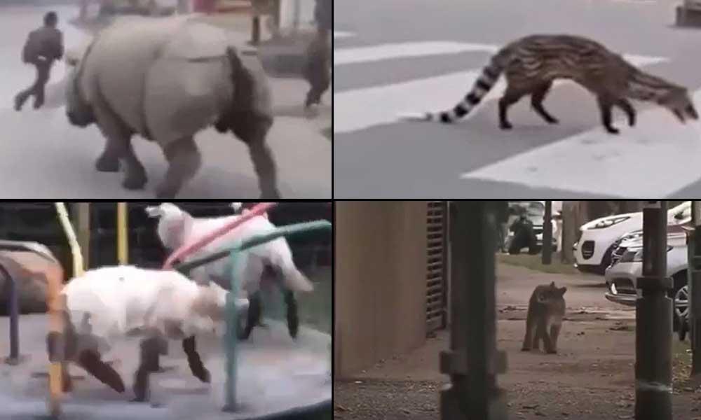 İnsanlar eve kapanınca vahşi hayvanlar sokaklara indi