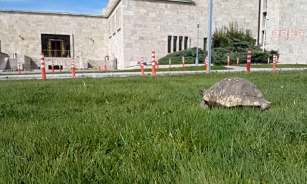 Meclis'te meydan kaplumbağalara kaldı