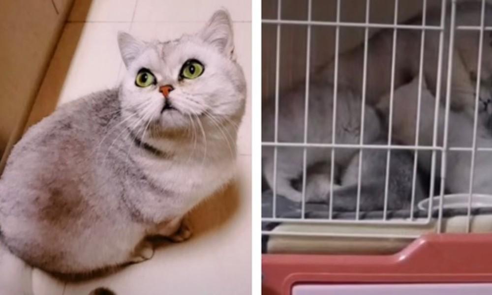 Günlerce yalnız kaldı, ailesi karantinaya alındı: Lele kedi hayata tutundu